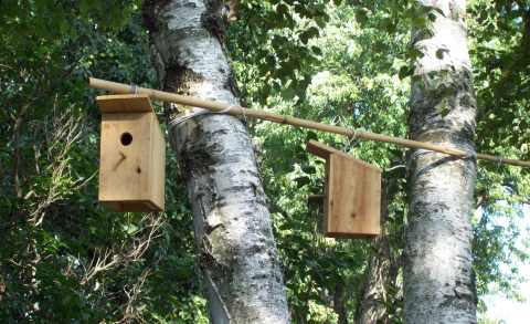 Birdhouses on bamboo Birch tree